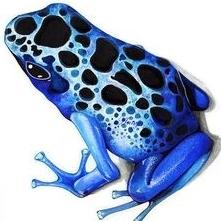 froggy58