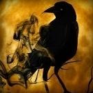 RavenSky
